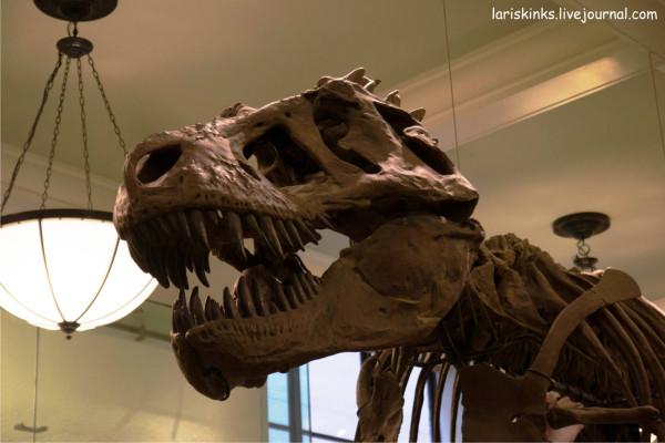 Музей Естествознания Нью-йорк2
