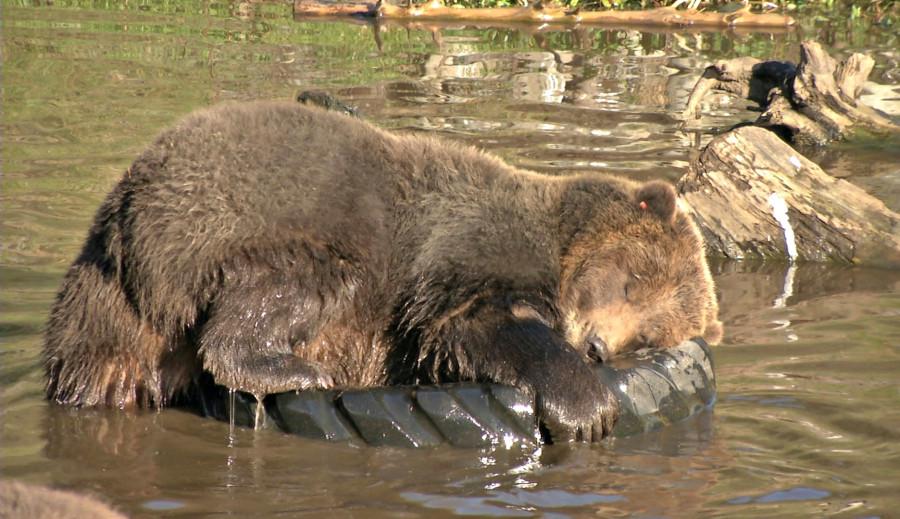 bear-pic-1