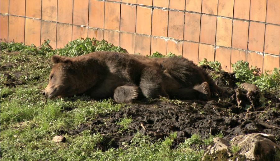 bear-pic-4