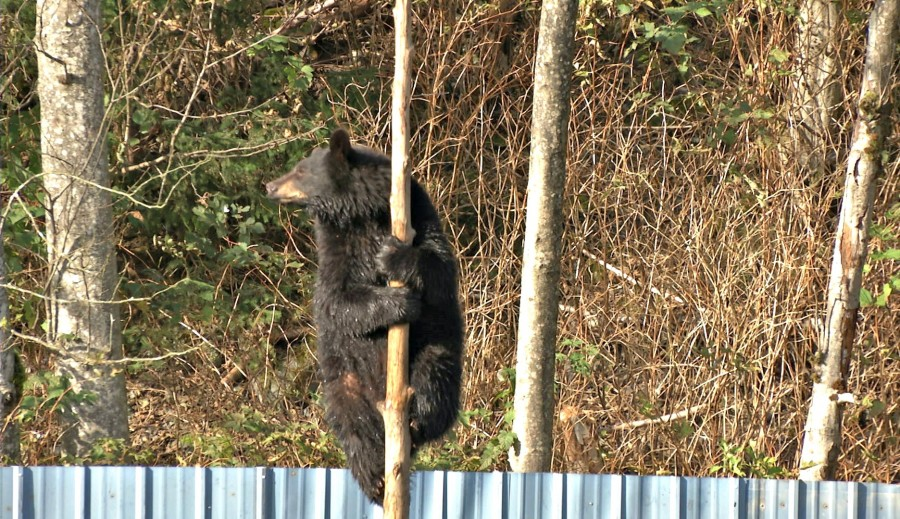 bear-pic-6