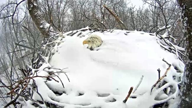 eagle_snow