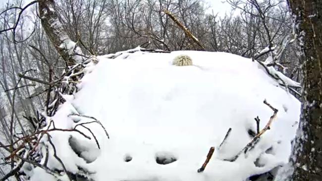 eagle_snow_3