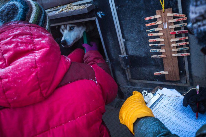 2015 Iditarod Fairbanks 07 - 20150309