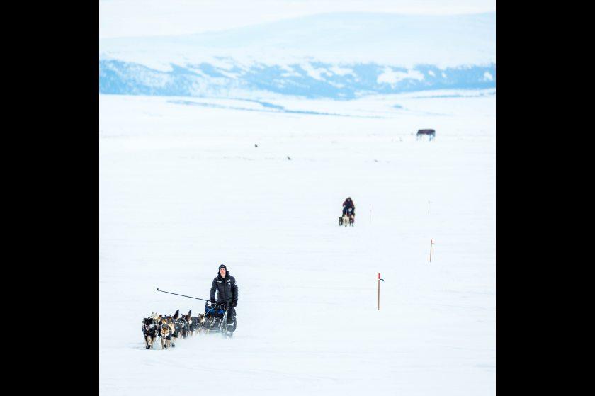 2015 Iditarod Koyuk 04 - 20150316