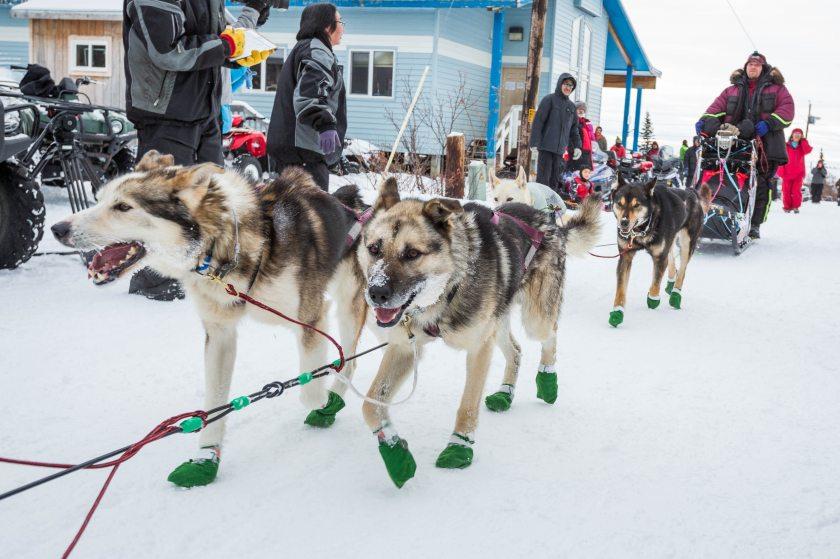 2015 Iditarod Koyuk 07 - 20150316
