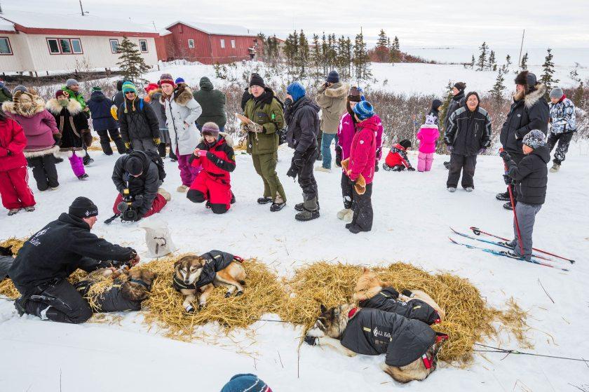 2015 Iditarod Koyuk 10 - 20150316