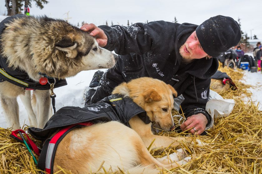 2015 Iditarod Koyuk 11 - 20150316
