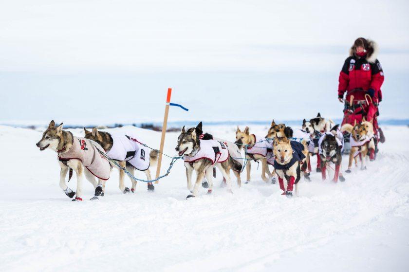 2015 Iditarod Koyuk 22 - 20150316