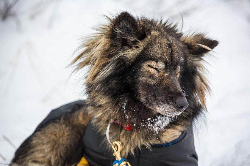 2015 Iditarod Koyuk 32 - 20150316