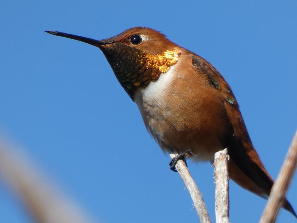 Время колибри