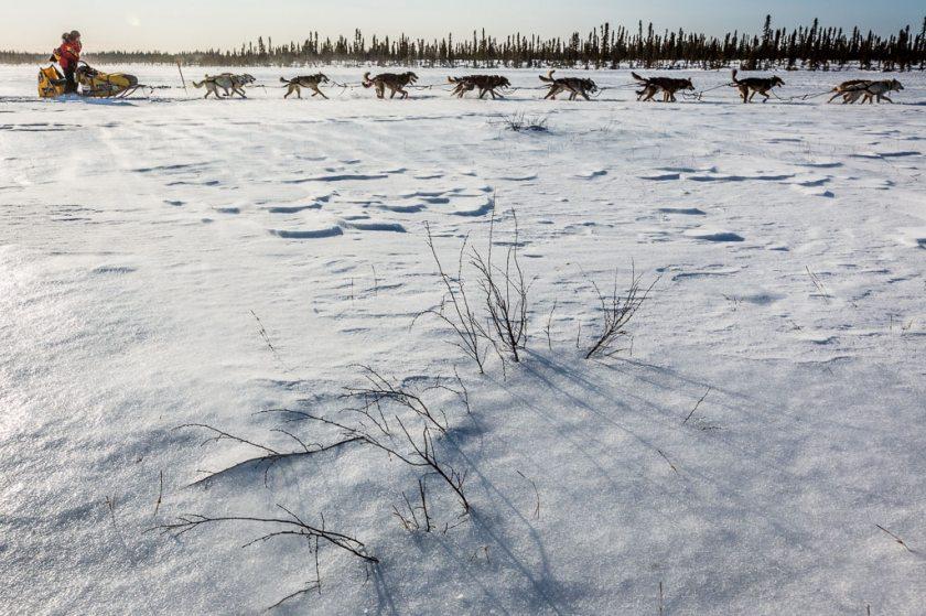 2014 Iditarod Cripple Ruby 08