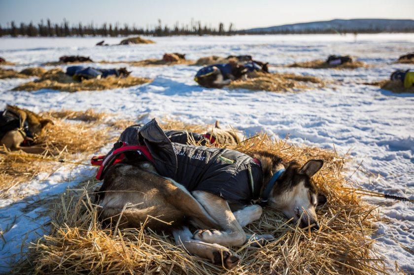 2014 Iditarod Cripple Ruby 10