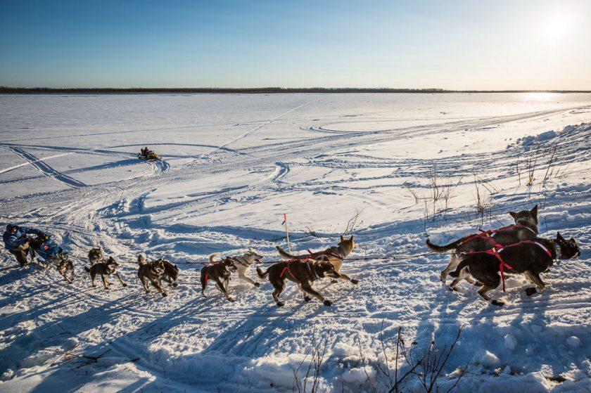 2014 Iditarod Galena 11