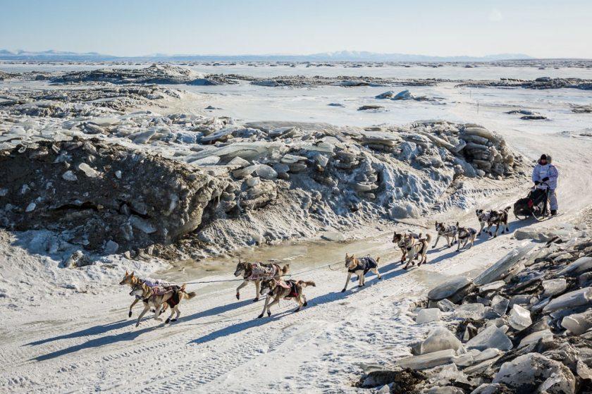 2014 Iditarod Koyuk 08