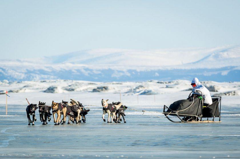 2014 Iditarod Koyuk 16