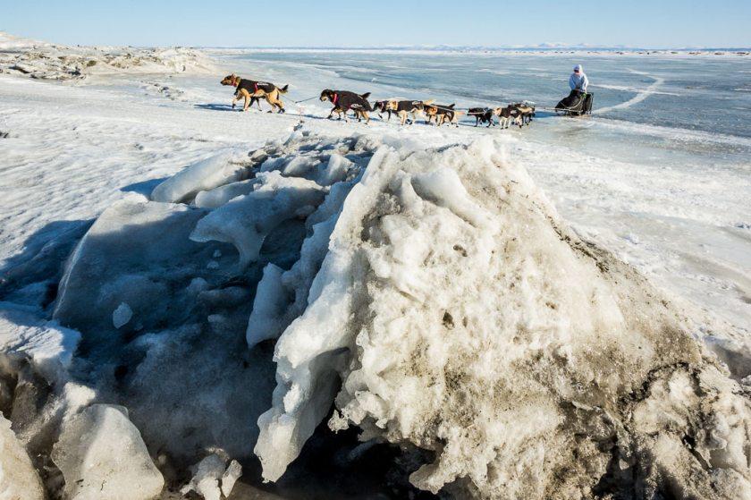 2014 Iditarod Koyuk 17