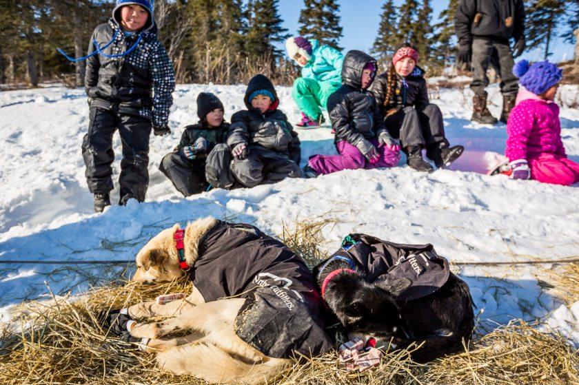 2014 Iditarod Koyuk 21