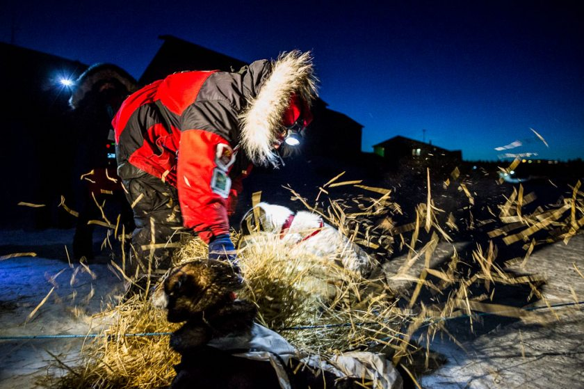 2014 Iditarod White Mountain 07