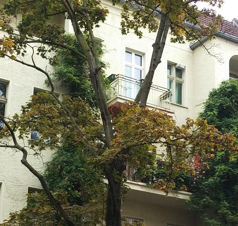 Дерево и балконы3.jpg