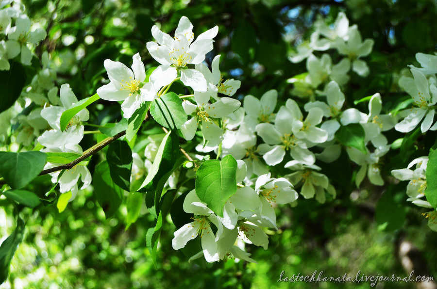 теплая весна 097.jpg