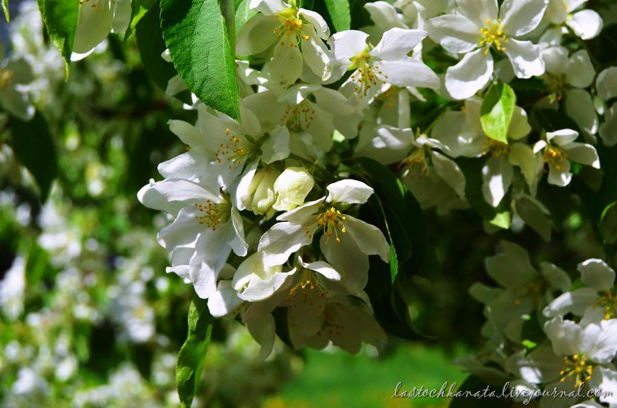 теплая весна 098.jpg