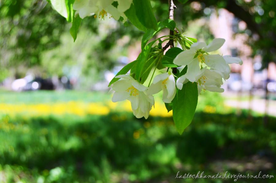 теплая весна 099.jpg