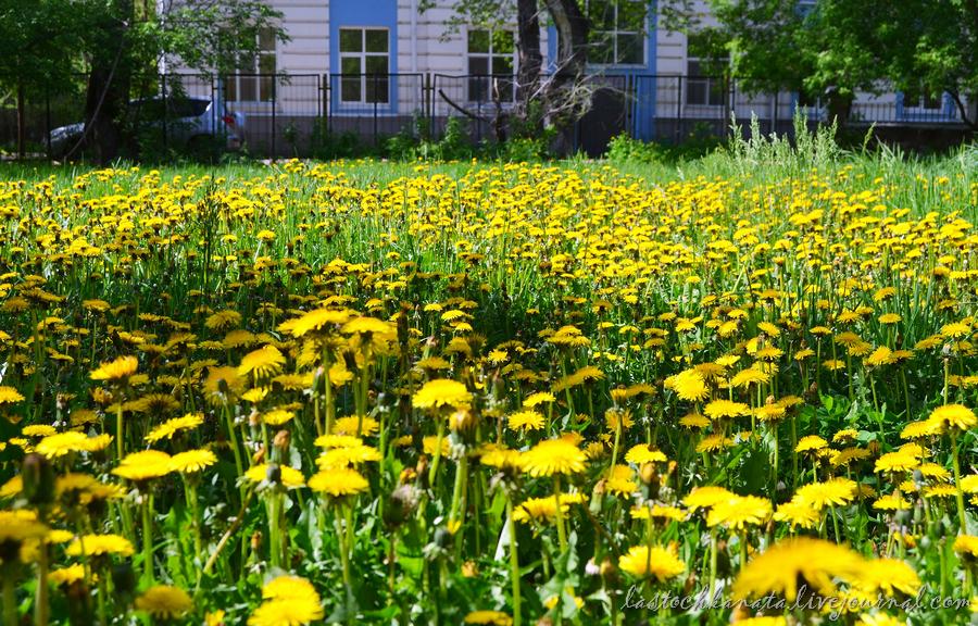 теплая весна 103.jpg