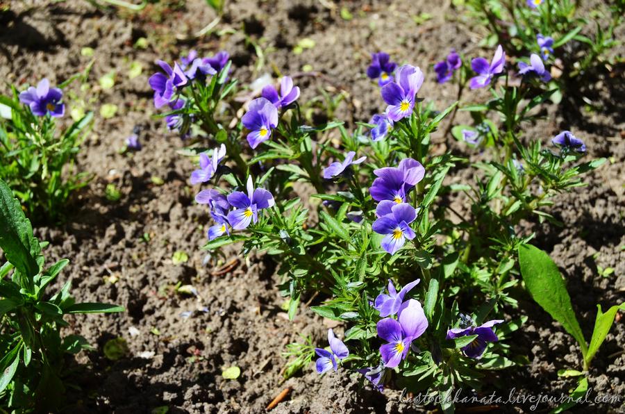 теплая весна 110.jpg