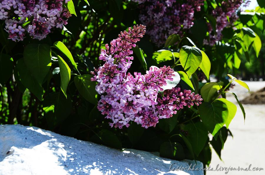 теплая весна 127.jpg