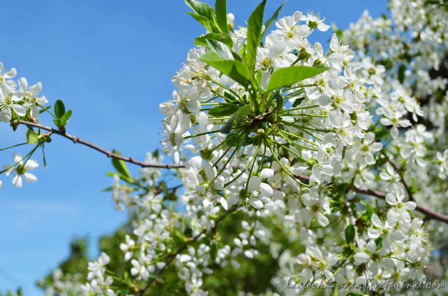 теплая весна 144.jpg