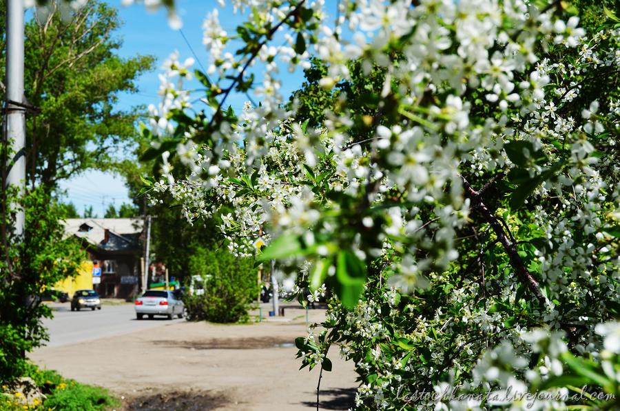 теплая весна 146.jpg
