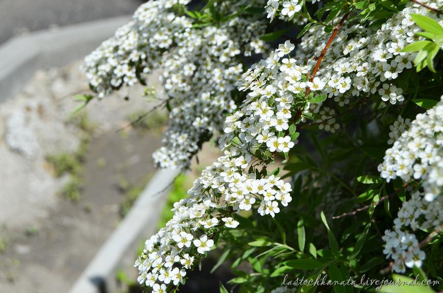 теплая весна 149.jpg