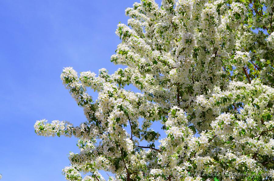 теплая весна 154.jpg