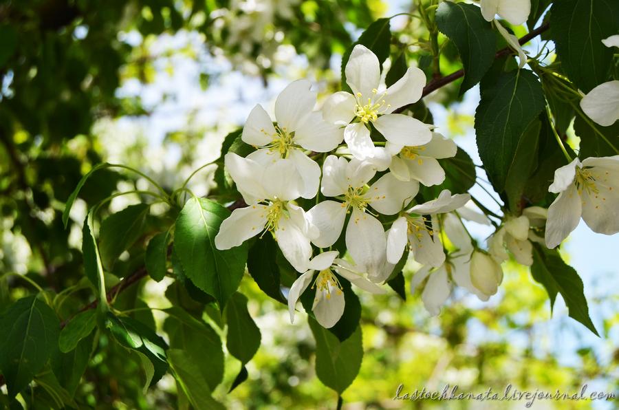 теплая весна 155.jpg