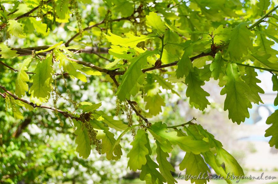 теплая весна 157.jpg