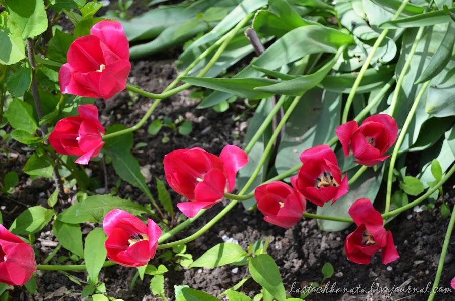 теплая весна 174.jpg