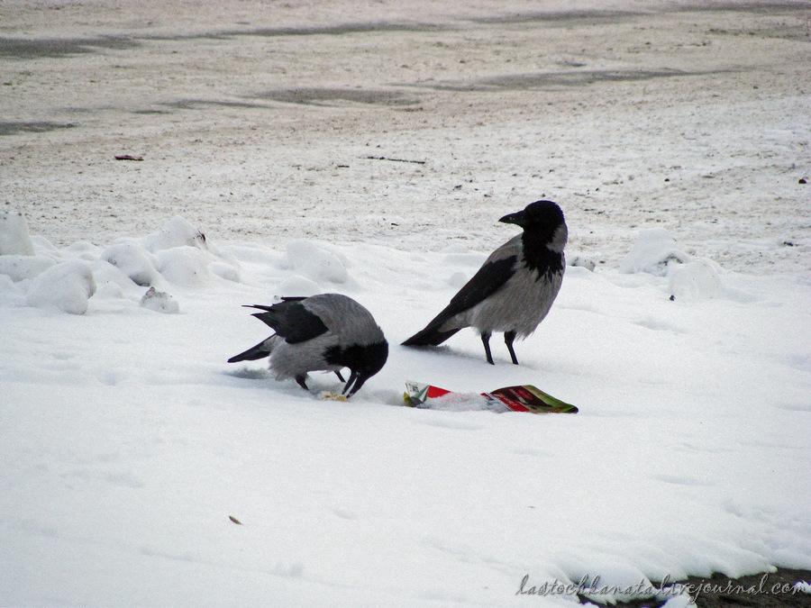 снежное 054.jpg