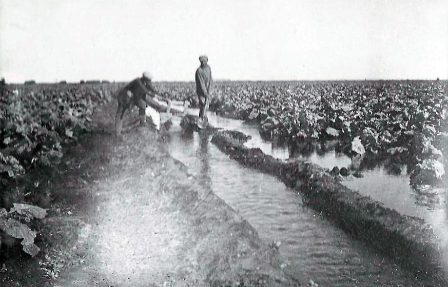 производство поливов в колхозах.jpg