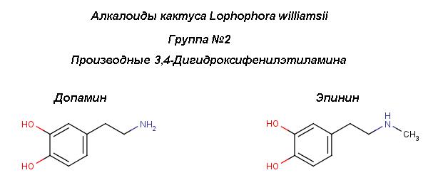 Peyot_3,4-hydroxy