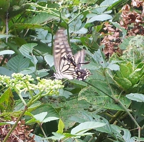 farfalla ai giardini imperiali