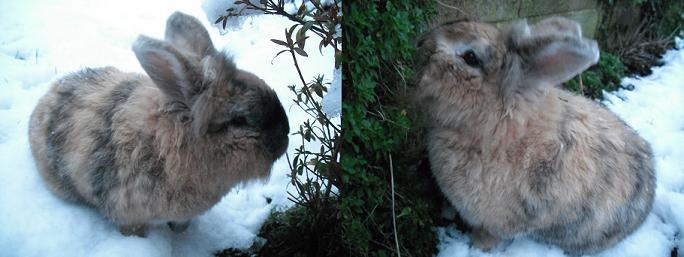 Friski snow