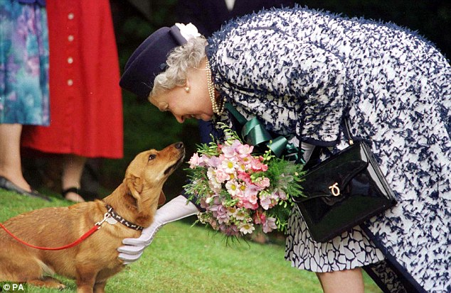 001D835F00000258-3161789-Queen_Elizabeth_II_gives_some_fuss_to_one_of_her_beloved_Corgi_s-a-5_1436956314292