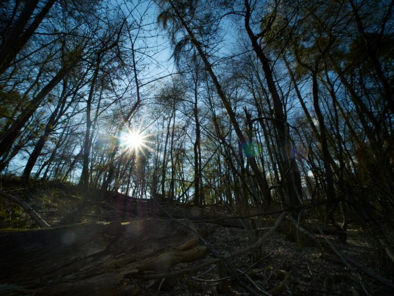Schöne Blicke in den langsam ergrünenden Wald