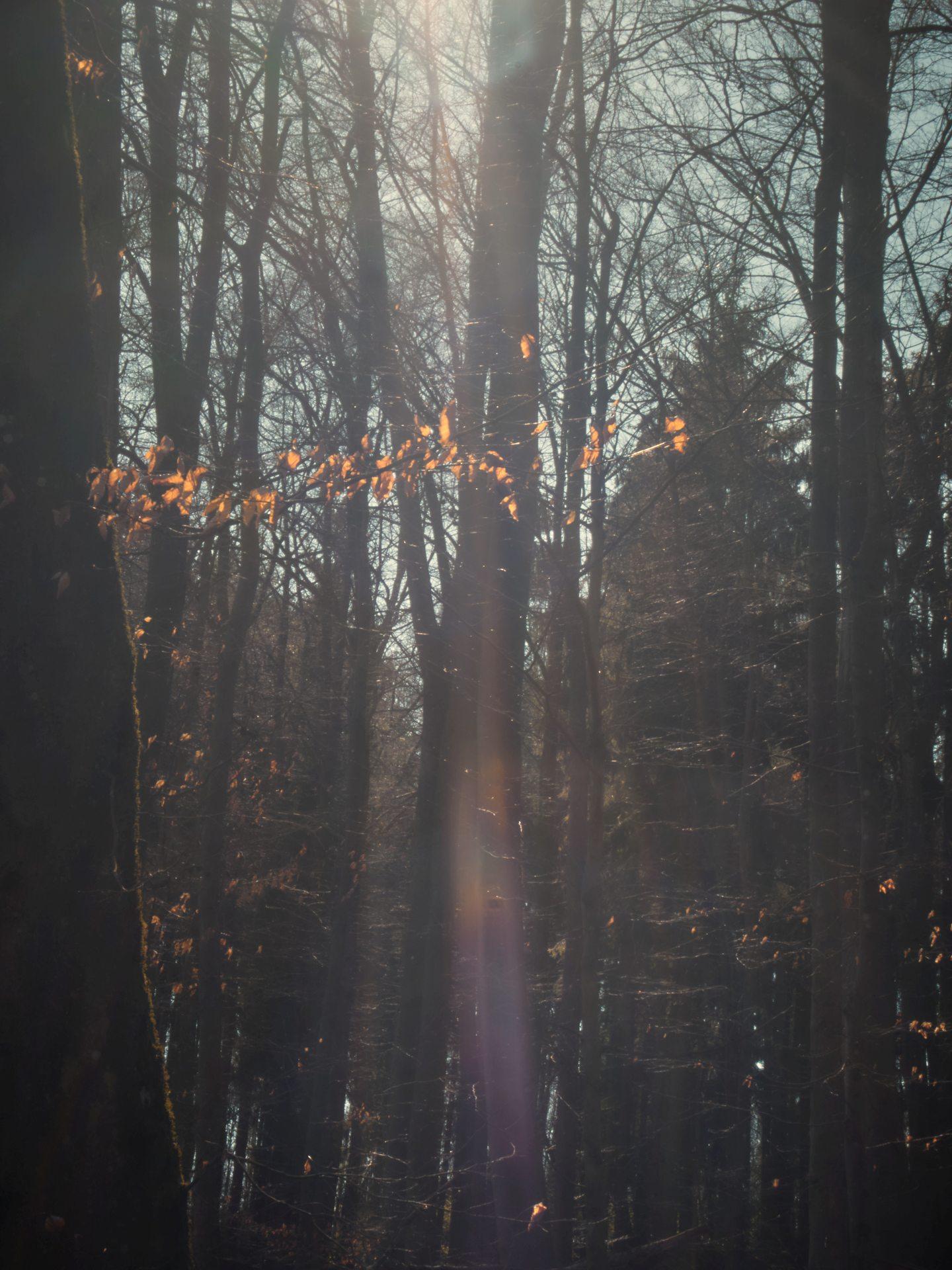 mystisch, der Wald im Tal