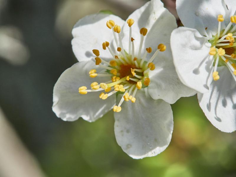 ich mag ja beide Arten, Blüten zu fotographieren: Sommerlich-hell ...