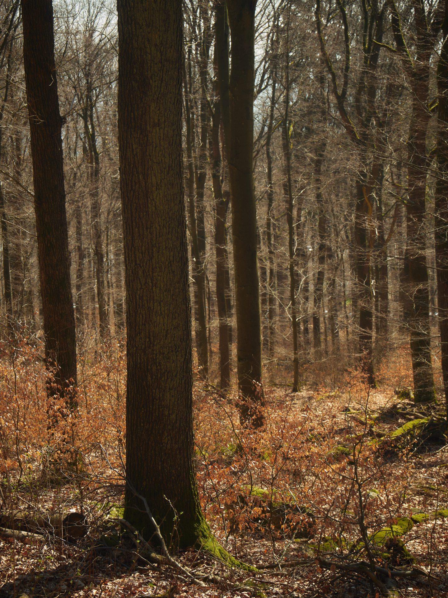 ... der Wald
