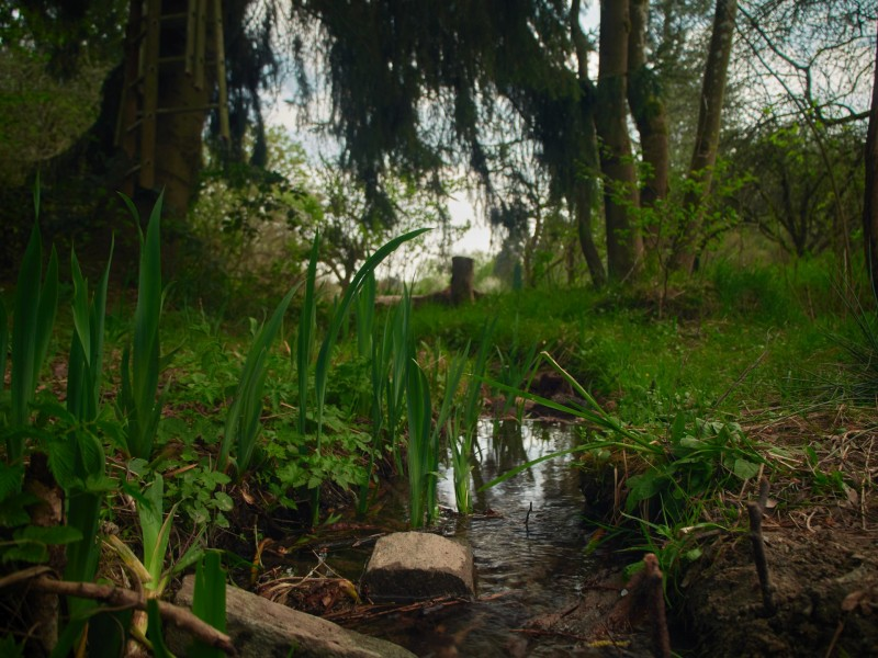 Der Bach, der durch das Tal fließt ist voller Wasserlilien (wenn ich die Blumen richtig identifiziert habe) - wenn das blüht wird es fantastisch aussehen