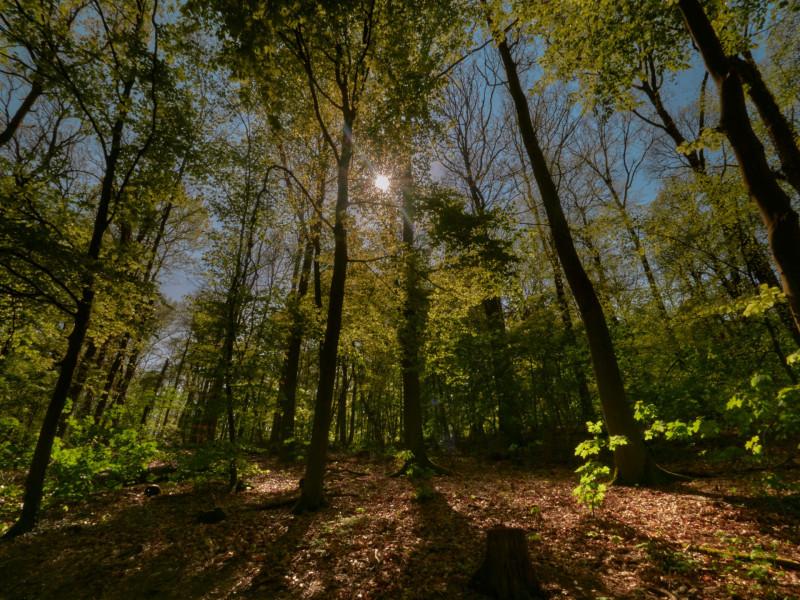Ein Waldspaziergang kann sehr schön sein - vor allem zur Zeit, wenn wenig Menschen unterwegs sind