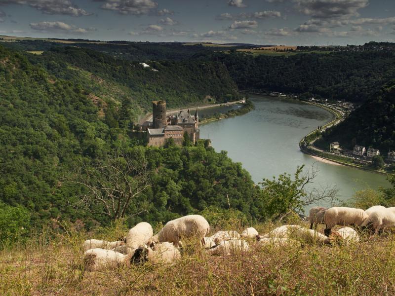 Burg Katz mit dem Loreleifelsen im Hintergrund