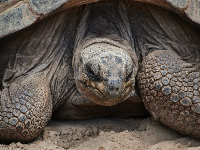 Kassiopeia? Oder Morla - ich war zwar kein Fan von Michael Ende, teile aber seine Begeisterung für Schildkröten